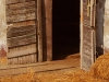 The Horse is Out of the Barn by Bill Williams